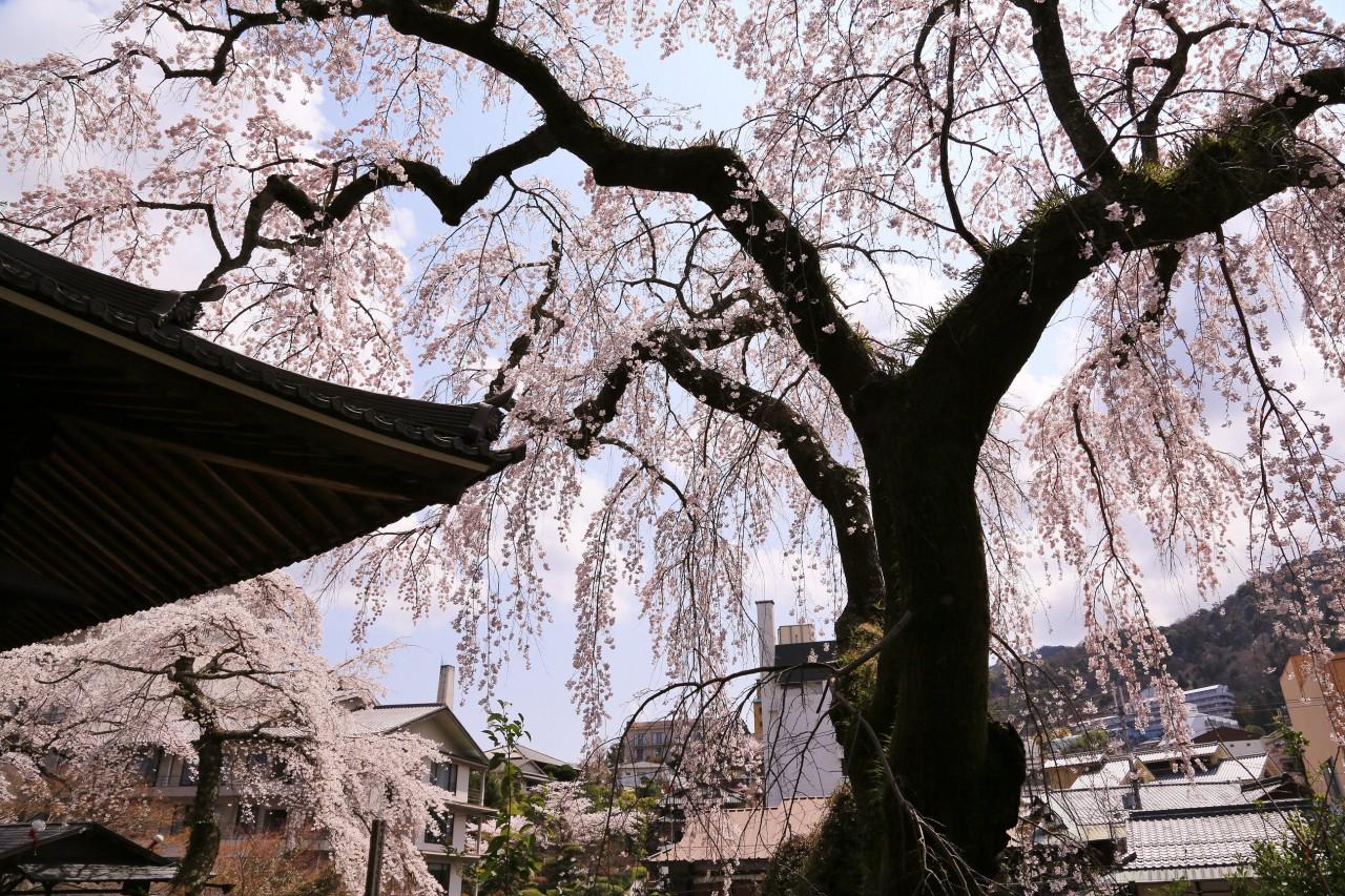 photo by kaneyan